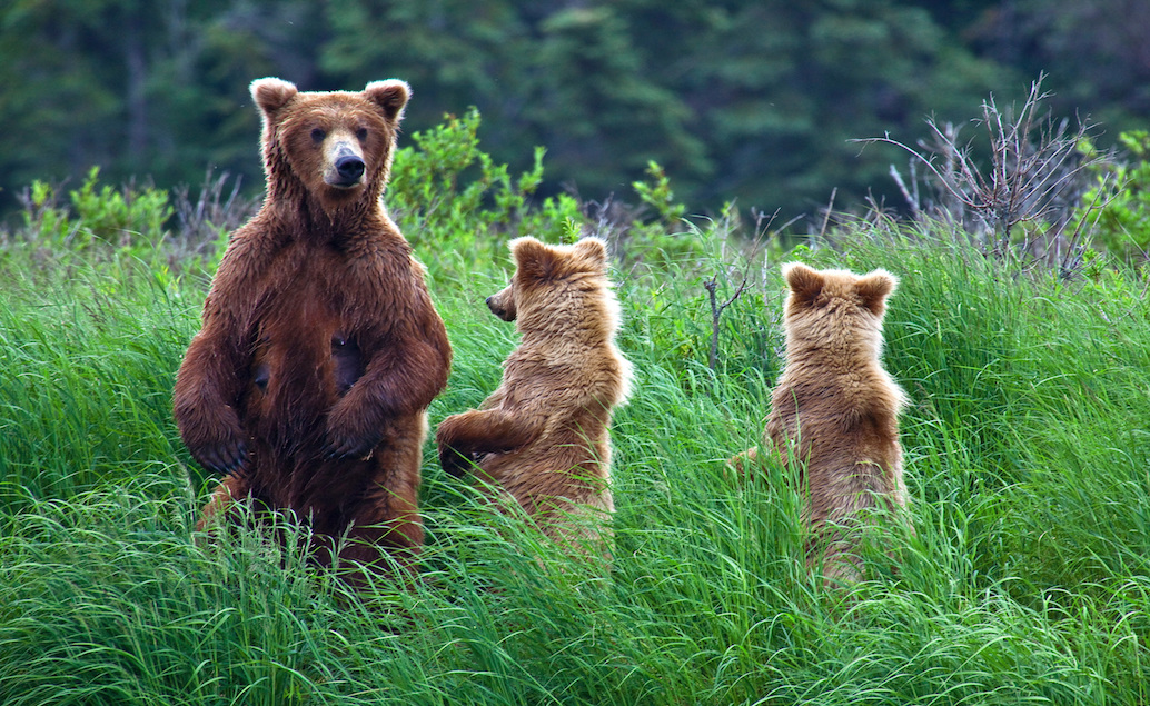 ALJAŠKA - výprava divokou přírodou s průvodcem