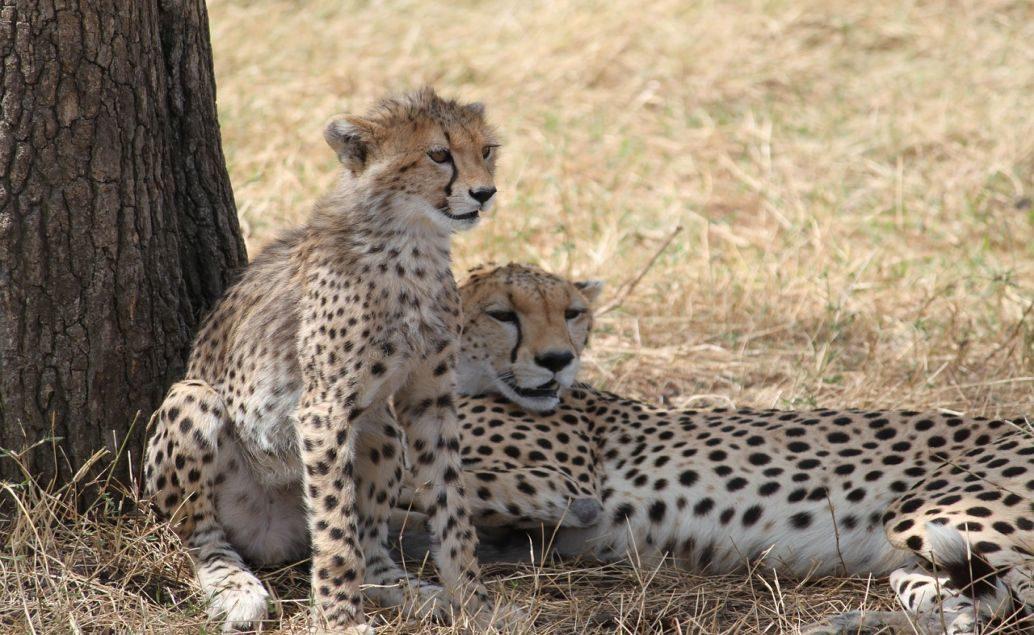 3 denní safari ze Zanzibaru