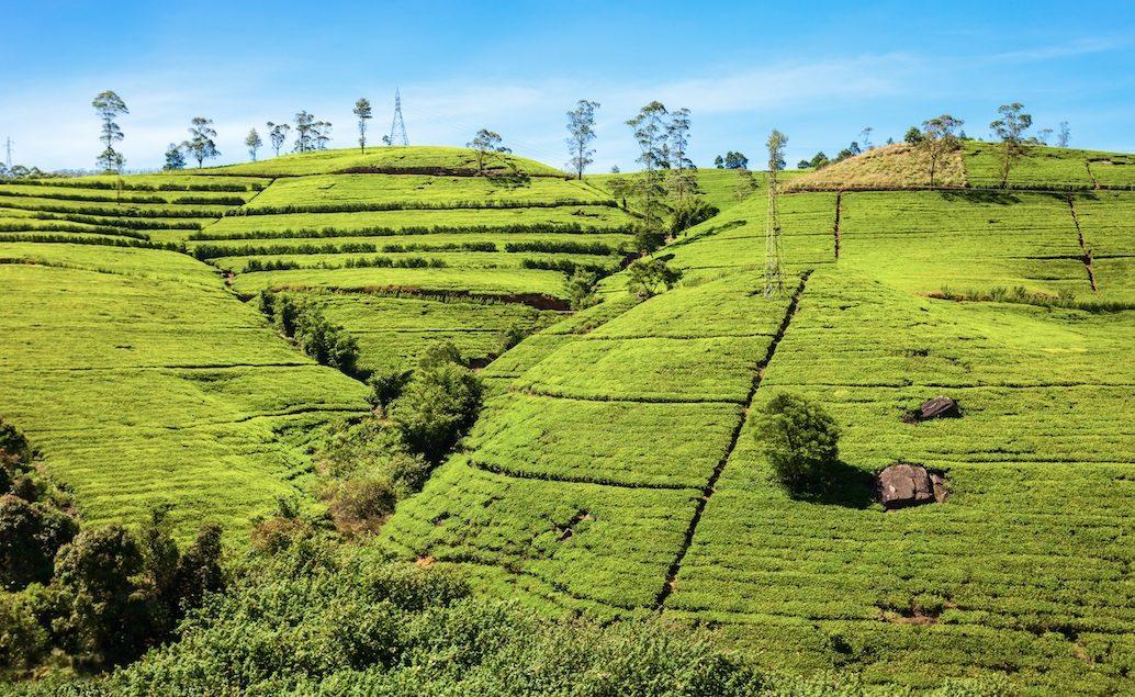 Zájezd kouzlo Srí Lanky a Malediv