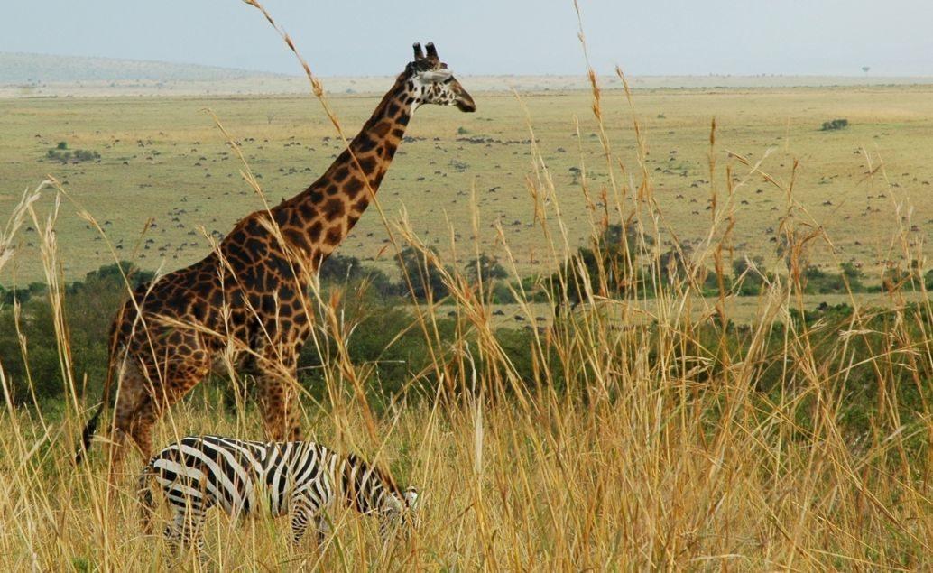 Tanzánie - Velká pětka a výstup na horu Mt. Meru s českým průvodcem