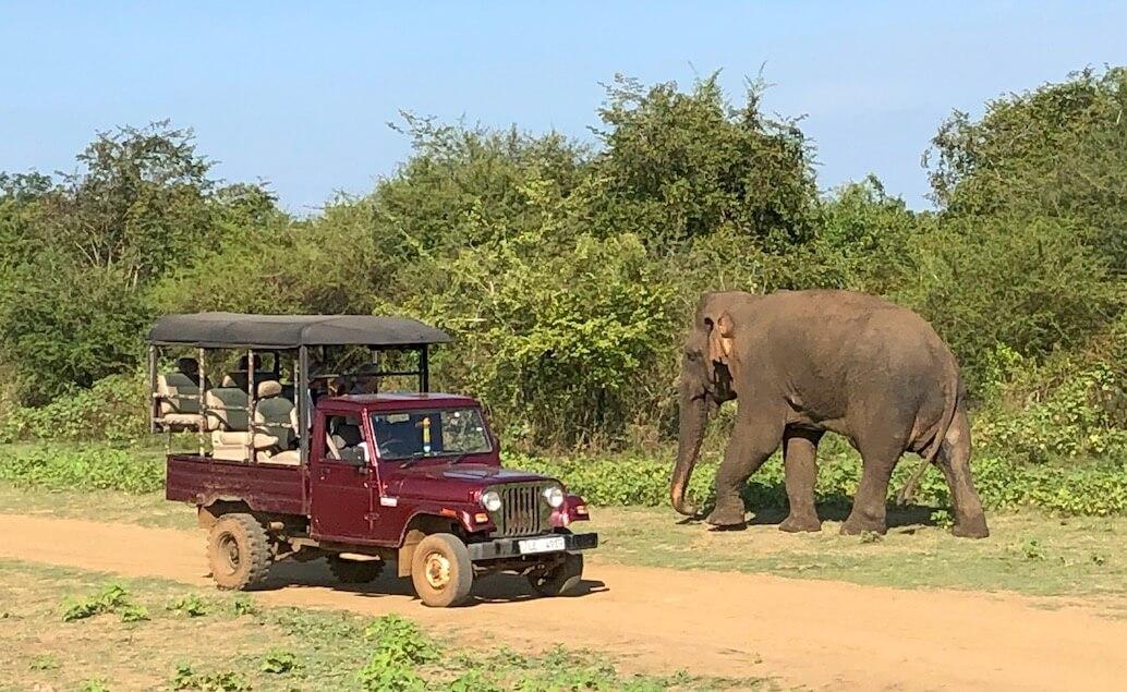 jeepové safari