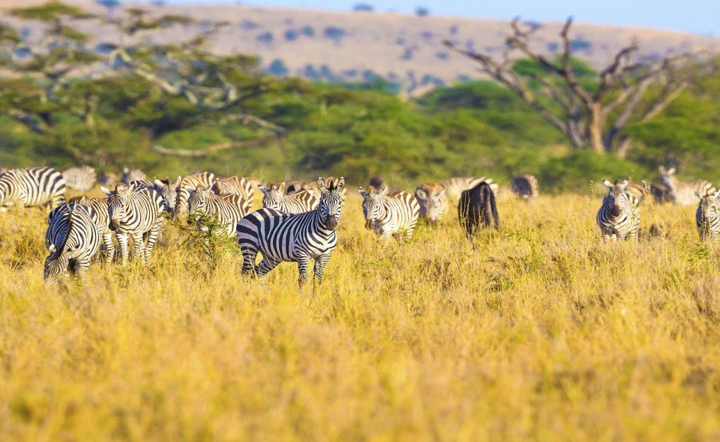 Tanzánie - velká pětka na safari a výstup na Mt. Meru