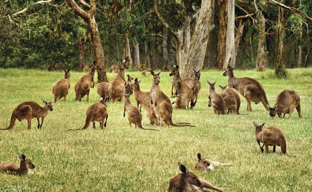 Zájezd Austrálie a Bali