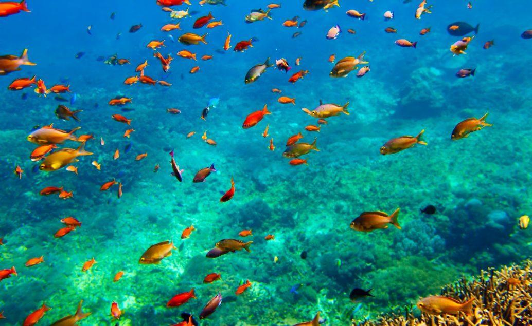 Enduro na Bali