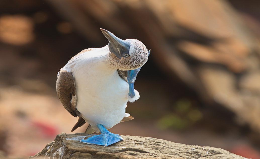 Rozmanitá fauna Galapág fakultativně