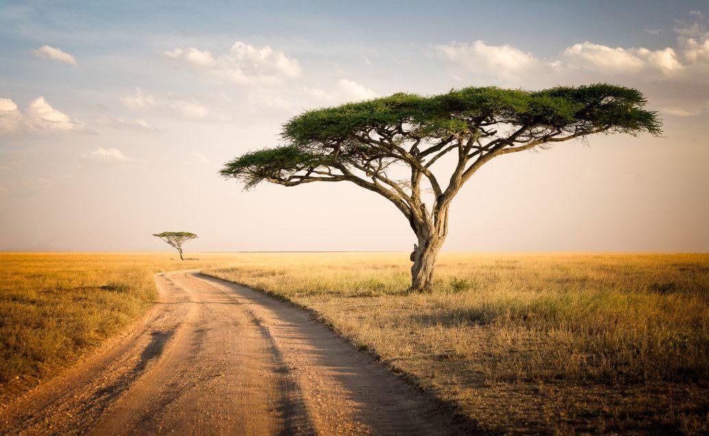 3 denní safari v luxusních safari stanech
