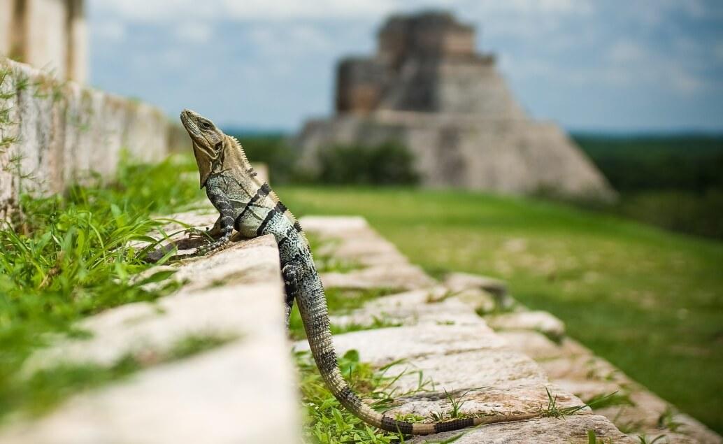 Aktivní dobrodružství napříč Yucatánem