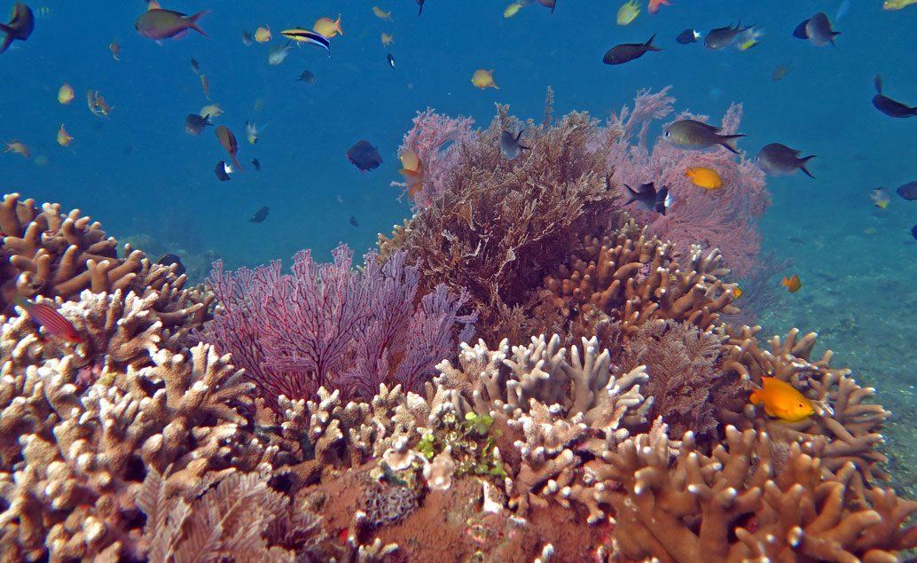 Poznávací zájezd krásy Bali