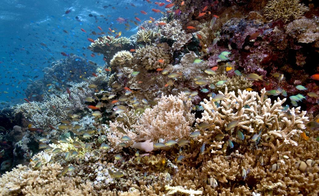 Zájezd To nejlepší z Bali a Komodo