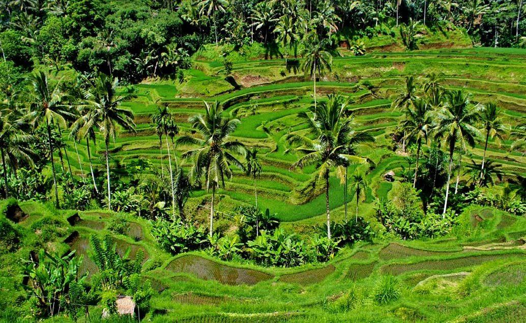 Bali, sopky Jávy a orangutáni na Sumatře